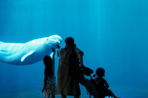 A family visits beluga whale