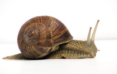 Snail memory transplant