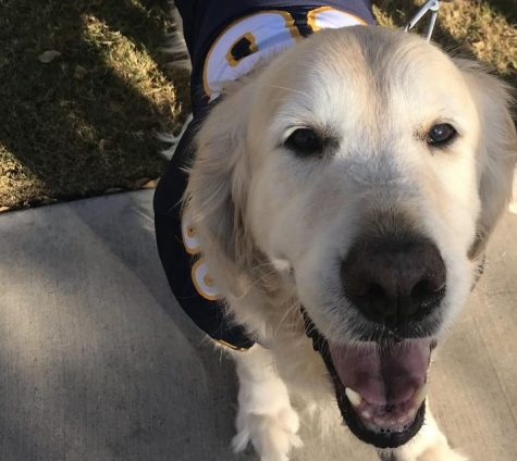 Dogs Dress Up For Third Annual Paws On Parade And Fall Fest